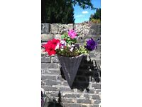 Planted hanging baskets for sale