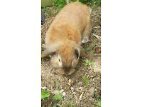 Beautiful pet Rabbit