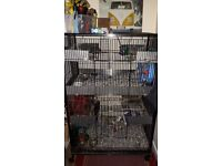 To good home three male degus plus large cage split into 2 compartments