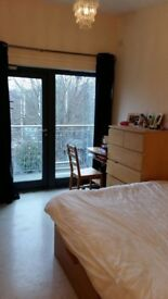 2 Luxury double rooms in the same apartment for rent