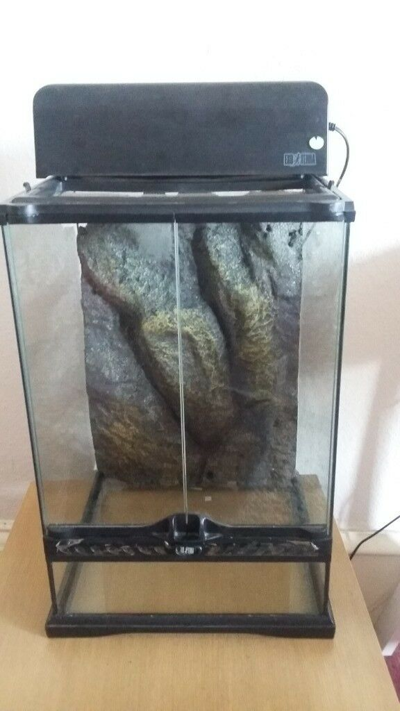 Vivarium With Heat Lamp Bulb Included And Heat Mat In Hyndland Glasgow Gumtree