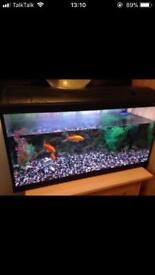 Fish tank 2ft 8 inches complete set up