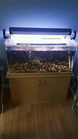 3ft Tropical Fish Tank (Everything Included)