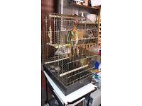 Big double bird cage
