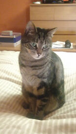 Leo Tiger. 4 year old Stripey Boy, Looking for loving home with garden