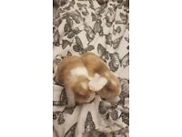 2 female bunny rabbits for sale