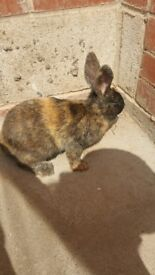 Baby rabbit rear colour 3 months old very friendly with kids.