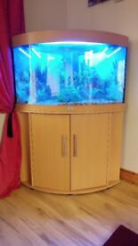 Juwel Trigon Corner Aquarium Fish Tank and Cabinet