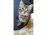 1 lovely kitten left
