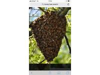 Free swarm removal service for honeybee swarms