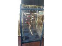 blue parrot cage