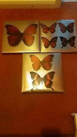 Butterfly cancas pictures