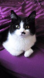 missing cat Sindi