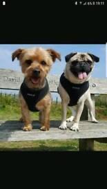 Dogwalker £10 per hour also home visits
