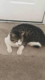 Cute female cat for sale