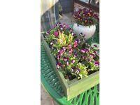 Rectangular Green Box with Violas, Cyclamen & Heather.