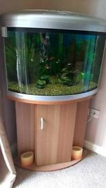 140ltr corner fishtank with stand