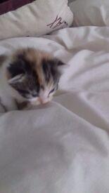 kittens (sold)