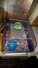 Dwarf hamster and cage