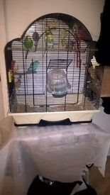 Bird Cage and Budgies