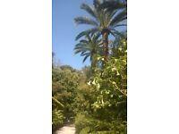 Menton Cote d'Azur Nice Monaco By the sea charming apartment