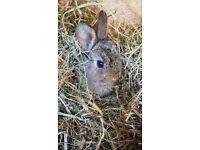 Baby bunnies 🐰