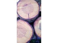 "Large Log Slice Stepping Stones - Set of 12 real wood log slices 12""-14"" diameter"