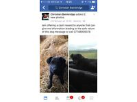 Stolen Patterdale Terrier. Stolen between 19/02/17 and 20/0216 from Seamer near Stokesley