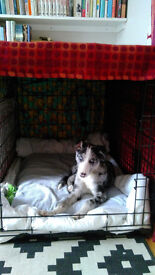 """30"""" Ellie Bo dog crate cage in Walthamstow"""