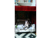 "30"" Ellie Bo dog crate cage in Walthamstow"