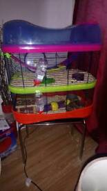 Hamsters and cage