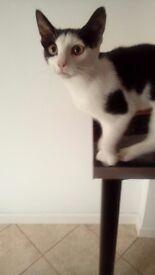 Six Month Old Male Kitten-neutered
