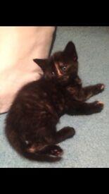 Beautiful Kittens Forsale
