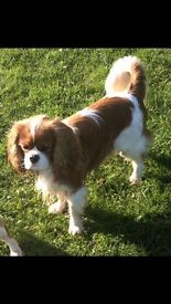 Dog grooming Maidstone