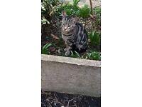 MISSING CAT E17 AREA