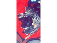 5 Kittens for sale