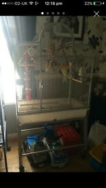 2x Rosellas parrots with cage toys n food