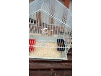 2 bengelese with cage