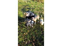 Playful Paws Dog walking and home boarding service