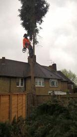 Fully insured nptc qualified arborist / tree surgeon / tree felling / tree surgery / forestry