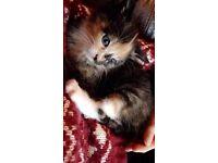 6 amazing Kittens