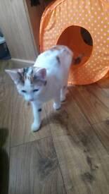 female old cat