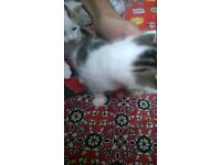 2 cute kitten's for sale to a loving home