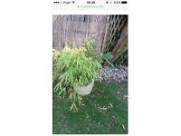 Garden pots with bamboo