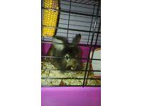 Leo the rabbit