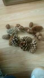 Assorted Pine Cones