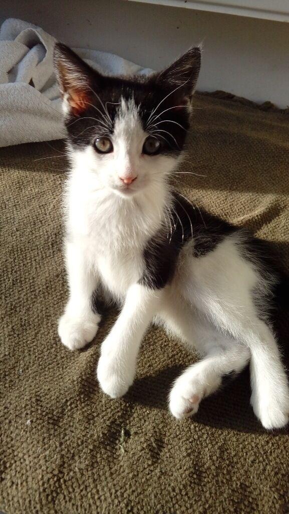 Kitten - black and white