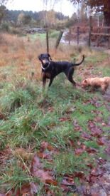 Dog walking available camberley