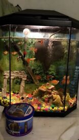 Tropical / Cold Water Fish Tank For Sale