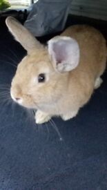 Five month old bunny for rehoming
